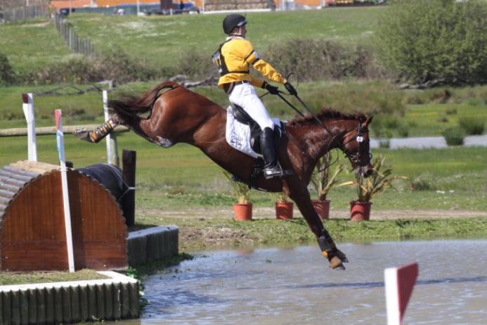 Cross Country Shipping >> SES Stallion: Chilli Morning, British Sport Horse, Frozen Semen Equine Semen