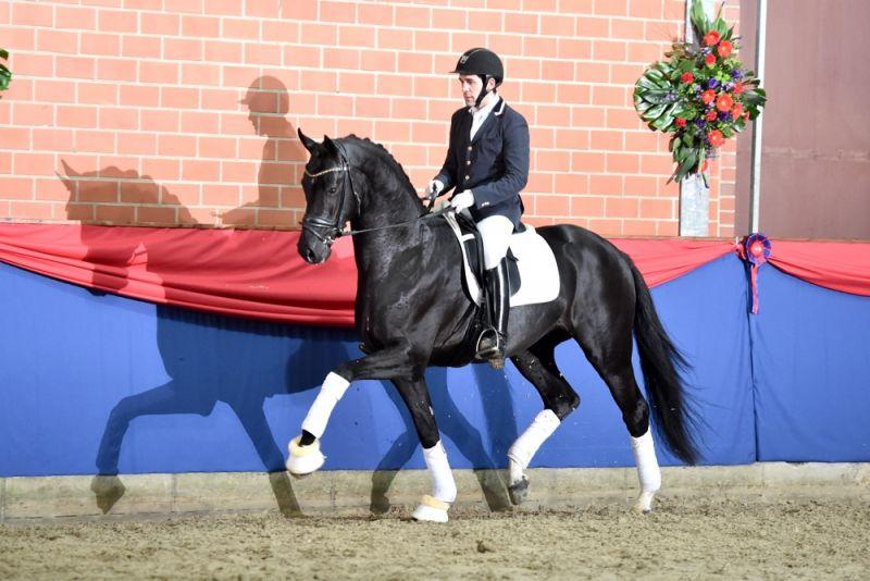Ses Stallion Grand Galaxy Win Dutch Frozen Semen Equine Semen