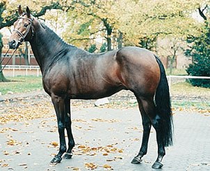 Immediate Credit Card >> SES Stallion: Laurie's Crusador xx, Thoroughbred, Frozen ...