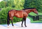 Stanislavsky XX Stallion At Stud Semen Fresh Frozen Sales North American