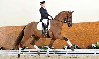 Don frederic hanoverian stallion superior equine sires for Domon frederic