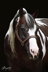Commander Riminic Paint Reining Stallion Superior Equine