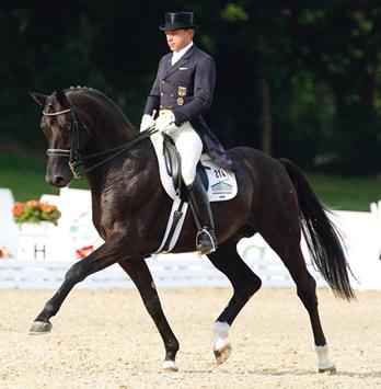 Desperados Havoverian Stallion Superior Equine Sires