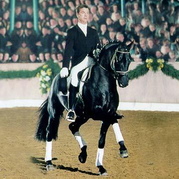 Sandro hit oldenburg stallion superior equine sires